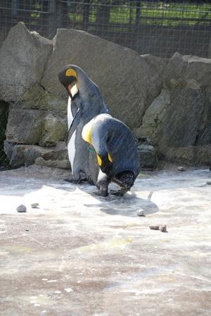 爱丁堡动物园